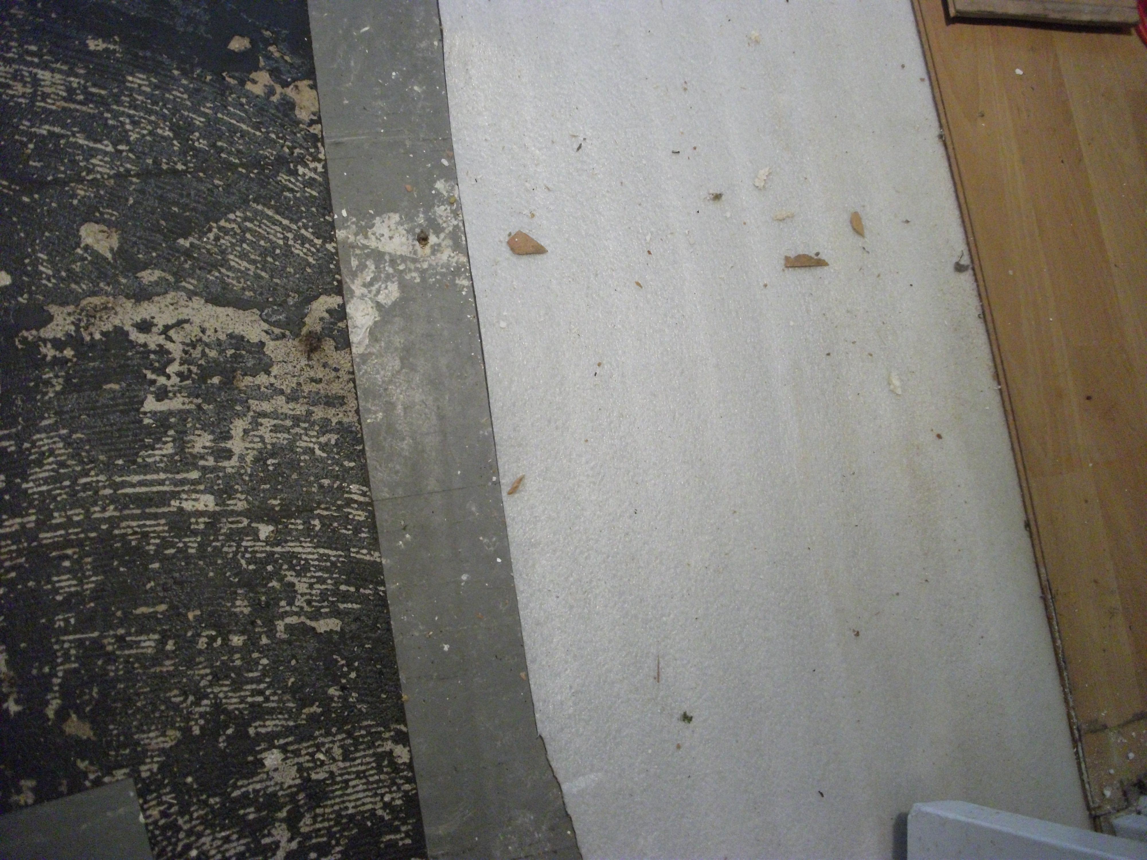 Schimmel Im Haus Finden schimmelpilze finden - götz autenrieth